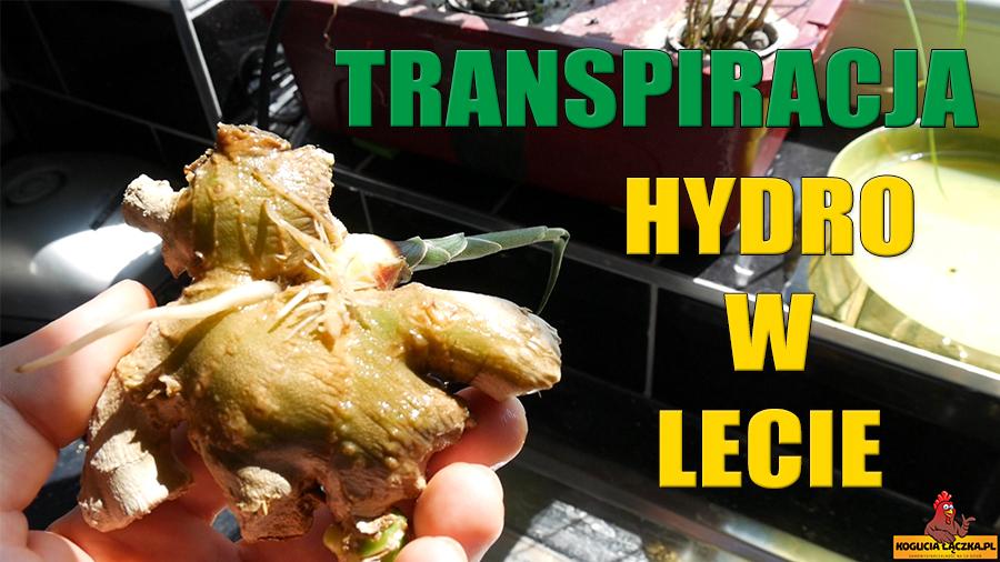 Rozkład nawozu transpiracja i parowanie z roślin w hydroponice