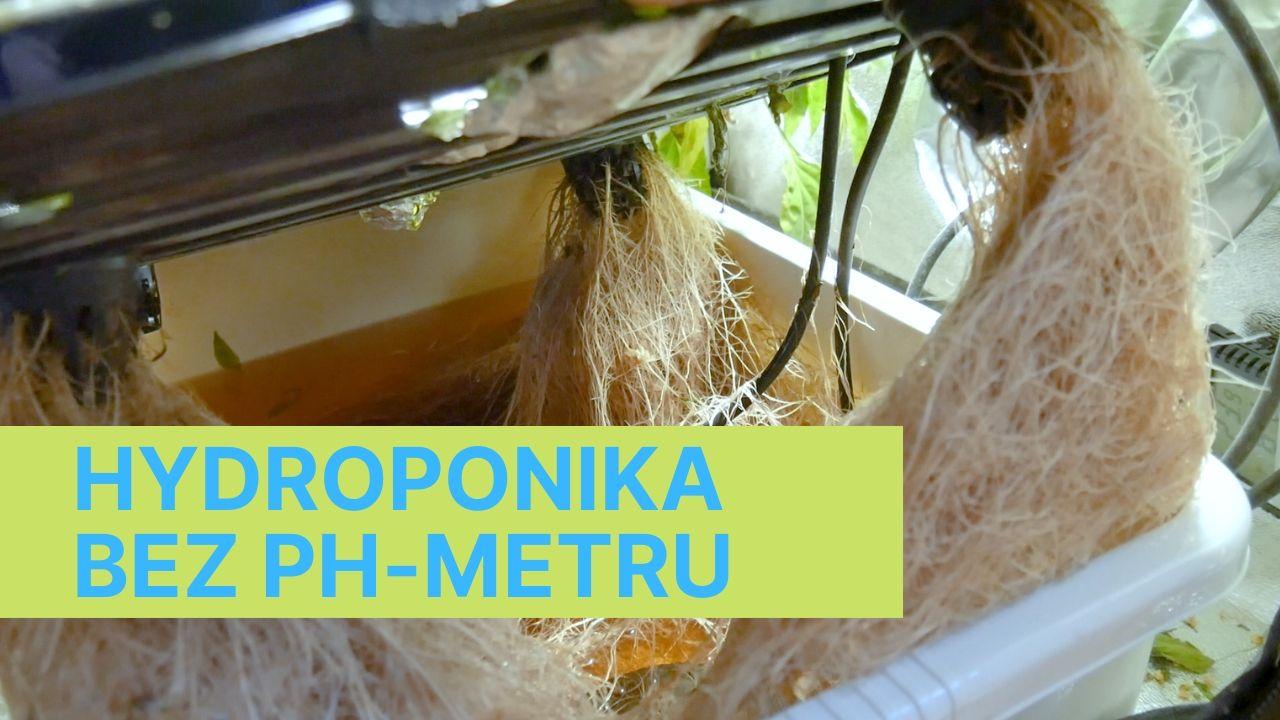 Hydroponika bez PHmetru – Papryki słodkie ozdobne