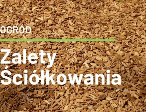 Ściółkowanie gleby zalety