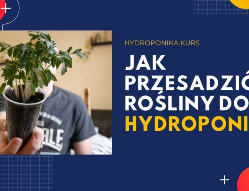 Przesadzanie roślin do hydroponiki