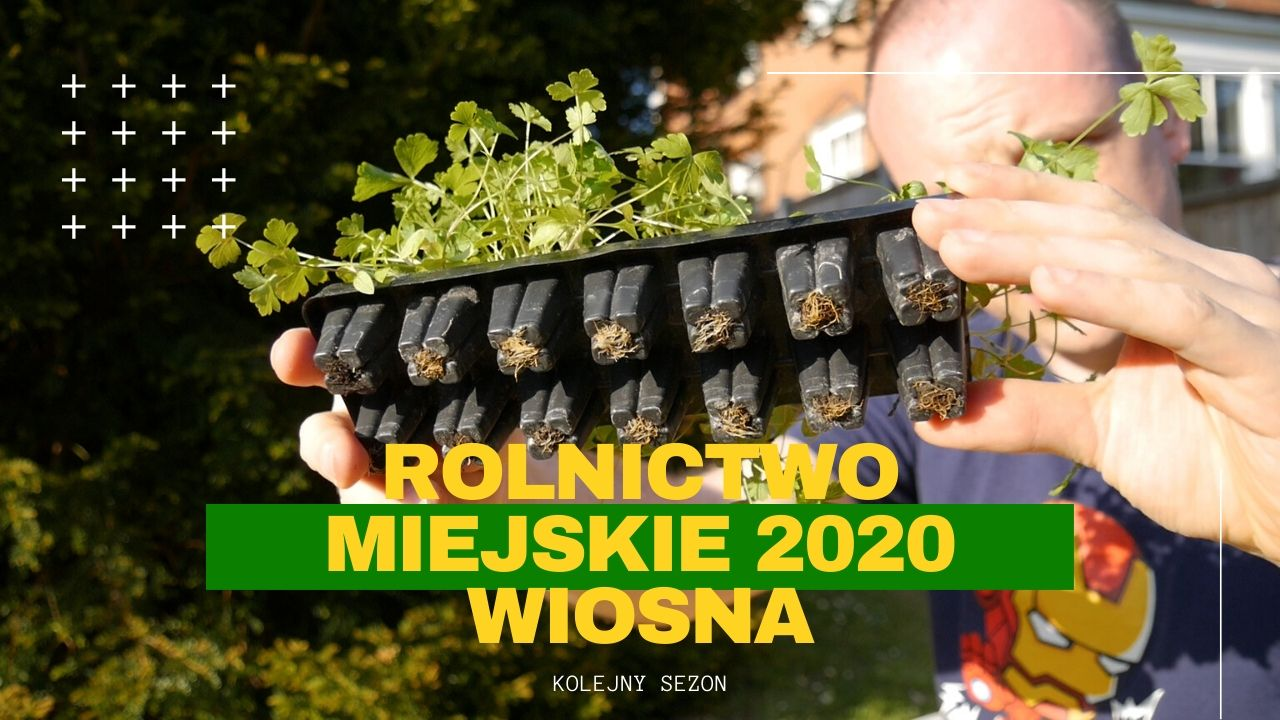 Rolnictow miejskie 2020 wiosna